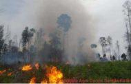 Kobaran api di Taman Nasional Baluran Situbondo di padamkan oleh petugas  Brigdalkarhutla